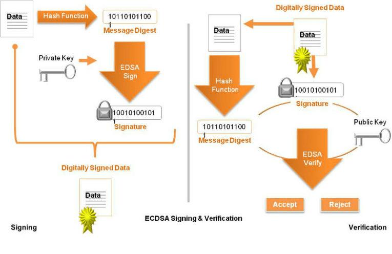 The Elliptic Curve Digital Signature Algorithm (ECDSA)